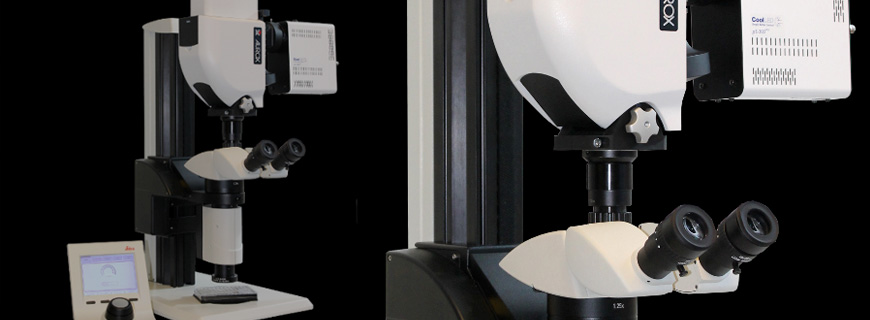 Aurox Brings Clarity to the Macroscope